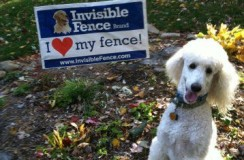 Invisible Fence Brand of the Tri-States