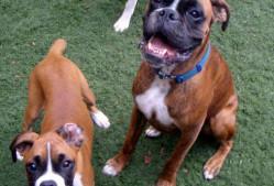 Doggie Business LLC